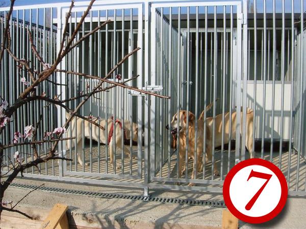Box per cani su misura n.7